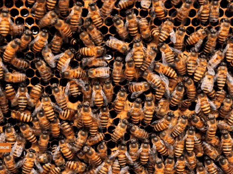 1 Million Bienen in einer Solaranlage - Video Reportage